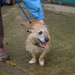 Found dog on 12 Sep 2017 in dublin_b. found, now in the dublin dog pound..