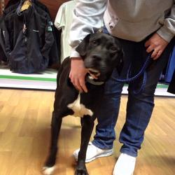 Found dog on 13 Apr 2015 in wilkstown. Male Found Sat 11th. Rathkenny Wilkinstown.  contact 0857172024.