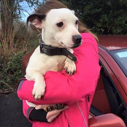 Found dog on 13 Jan 2016 in LUCAN... found..found in LUCAN wearing a collar, no chip. She is in Hermitage Vets tonight and will be going to ASHTON POUND tomorrow. She is super friendly and affectionate. She is great with kids and dogs. Please share to help her home.