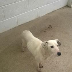 Found dog on 13 Jan 2016 in Townspark Navan. found/...2yr old Terrier x..ref 22.found in Townspark Navan...contact Meath pound on 087 0676766...thanks