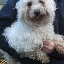 Found dog on 13 Jan 2017 in Citywest Luas Stop , Saggart. found, now in the dublin dog pound.. Date Found: