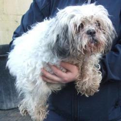 Found dog on 13 Jan 2017 in Main Road , Tallaght. found, now in the dublin dog pound... Date Found: