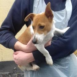 Found dog on 13 Jul 2017 in Kilinarden Estate , Tallaght. found, now in the dublin dog pound.. Date Found:
