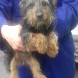 Found dog on 13 Jul 2017 in Village , Tallaght. found, now in the dublin dog pound... Date Found: