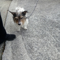 Reunited dog 13 Nov 2017 in Finglas/Ashton. Reunited! 