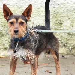 Found dog on 13 Oct 2014 in dublin. found terrier, now in dublin dog pound...