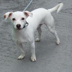 Found dog on 13 Oct 2016 in Whitestown Ind Est , Tallaght. found, now in the dublin dog pound.. Date Found: Wednesday, October 12, 2016 Location Found: Whitestown Ind Est , Tallaght