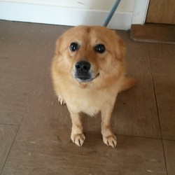 Found dog on 14 Apr 2014 in Wicklow. Found Carnew, Wicklow.  Contact Wicklow Dog Pound for information on 040444873. 