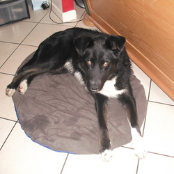 Found dog on 14 Dec 2013 in Limerick city center. male dog,black white,very frendly/Contakt Ana 0877743831