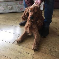 Found dog on 14 Feb 2017 in Batterstown, Co Meath. found...Found in Lismahon, Batterstown, Co Meath...please post here if you have any info...thanks. contacts dogs in distress or meath pound