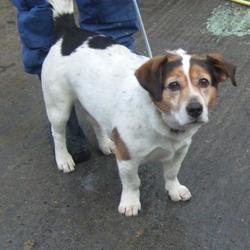 Found dog on 14 Feb 2017 in Orchardstown Avenue , Rathfarnham. found, now in the dublin dog pound... Date Found: Monday, February 13, 2017 Location Found: Orchardstown Avenue , Rathfarnham