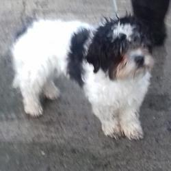 Found dog on 14 Feb 2018 in Tallaght , Firhouse Road. found, now in the dublin dog pound... Date Found: