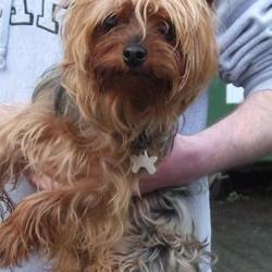Found dog on 14 Jan 2016 in Springfield Tallaght , Birchwood. found, now in the dublin dog pound... Date Found: Wednesday, January 13, 2016 Location Found: Springfield Tallaght , Birchwood