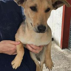 Found dog on 14 Jul 2017 in Kilmoon Road, Duleek. found...6mt old Terrier x ..found Kilmoon Road, Duleek 2 weeks ago.. ref 213.. contact Meath pound on 087 0676766 ..thanks