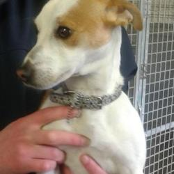 Found dog on 14 Oct 2014 in lucan. found, now in dublin dog pound.. Date Found: Monday, October 13, 2014 Location Found: Weston Est , Lucan