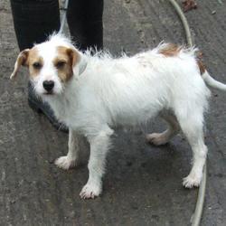Found dog on 14 Sep 2015 in Foxdene Avenue , Clondalkin. found, now in the dublin dog pound.,.. Date Found: Friday, September 11, 2015 Location Found: Foxdene Avenue , Clondalkin