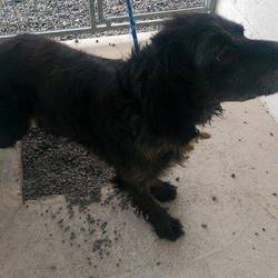 Found dog on 15 Apr 2015 in Lobinstown. found male,6yr old Setter X....found in Lobinstown...ref 181...contact Meath pound..