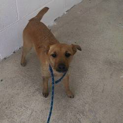 Found dog on 15 Apr 2015 in navan co meath. found female..2yr old Terrier...brought in from Navan Vets...ref 180..contact Meath Pound...