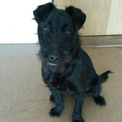 Found dog on 15 Apr 2015 in Wicklow. Found Arklow, Co Wicklow.  Contact Wicklow Dog Pound for information on 040444873.