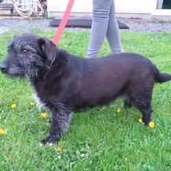 Reunited dog 15 Apr 2017 in Duboyne. DOG FOUND: Dunboyne area , little brown/black dog with grey eyebrows and white chest. Slightly Older dog. If anyone recognizes her as their dog or a neighbors please contact me on 0860801975 or facebook. Please share this around. Proof of ownership required.