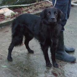 Found dog on 15 Dec 2014 in crumlin. found black lab, now in the dublin dog pound.. Date Found: Friday, December 12, 2014 Location Found: Crumlin Walkinstown , Crumlin Cross