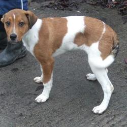 Found dog on 15 Feb 2017 in Tallaght , Brookview Drive. found, now in the dublin dog pound... Date Found: Tuesday, February 14, 2017 Location Found: Tallaght , Brookview Drive
