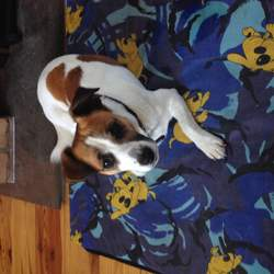 Found dog on 15 Jul 2015 in Sallins. Find young Jack Russell, male in Sallins 15th July, about 6p.m. Dog is friendly and happy. Owners please call me 0894464347