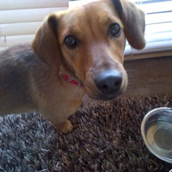 Found dog on 15 Jun 2013 in Dalkey. Tan Female Mixed breed dog.  Less 1 year old.  Found No collar.  Found in Dalkey.  Call 0867807058.
