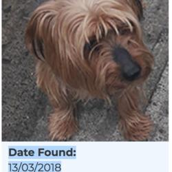 Found dog on 15 Mar 2018 in Clondalkin. found, now in the dublin dog pound,...Date Found: 13/03/2018 Location Found: Clondalkin