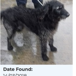 Found dog on 15 Mar 2018 in Fortfield Road, Terenure. found, now in the dublin dog pound..Date Found: