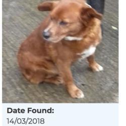Found dog on 15 Mar 2018 in Kiltalown Crescent, Tallaght. found,now in the dublin dog pound...Date Found: 14/03/2018 Location Found: Kiltalown Crescent, Tallaght