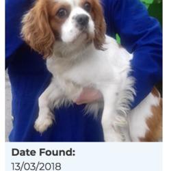 Found dog on 15 Mar 2018 in Tallaght Village. found, now in the dublin dog pound Date Found: 13/03/2018 Location Found: Tallaght Village