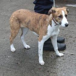 Found dog on 15 Oct 2014 in tallaght. found, now in dublin dog pound.. Date Found: