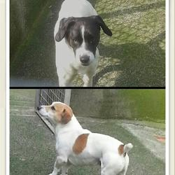 Found dog on 16 Apr 2014 in mullingar. found together in Belvedere Hills, mullingar.contact the Mullingar pound on 044 9343834