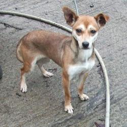Found dog on 16 Dec 2014 in clondalkin. found, now in the dublin dog pound.. Date Found: Monday, December 15, 2014 Location Found: Village , Clondalkin