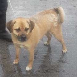 Found dog on 16 Jan 2018 in Ballymount , Ballymount Ind Es. found, now in the dublin dog pound... Date Found: Monday, January 15, 2018 Location Found: Ballymount , Ballymount Ind Es