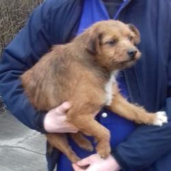 Found dog on 16 Jan 2018 in Cherryfield , Templeogue.... found, now in the dublin dog pound... Date Found: Friday, January 12, 2018 Location Found: Cherryfield , Templeogue