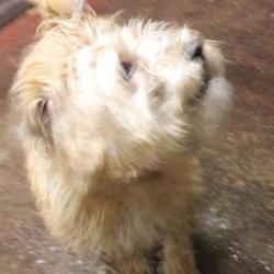 Found dog on 16 Jan 2018 in Main St, , Tallaght. found, now in the dublin dog pound... Date Found: Saturday, January 13, 2018 Location Found: Main St, , Tallaght