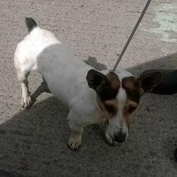 Found dog on 16 Jul 2015 in Corkagh Park , Clondalkin. found...now in the dublin dog pound.. Date Found: Wednesday, July 15, 2015 Location Found: Corkagh Park , Clondalkin