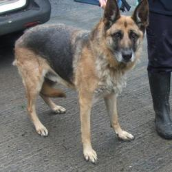 Found dog on 16 Jun 2016 in  Rathmintin , Tallaght. found, now in the dublin dog pound... Date Found: Tuesday, June 14, 2016 Location Found: Rathmintin , Tallaght