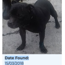 Found dog on 16 Mar 2018 in Pinewood, Clondalkin.... found...Date Found: 15/03/2018 Location Found: Pinewood, Clondalkin