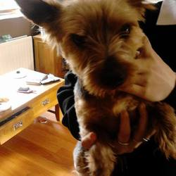 Found dog on 16 May 2014 in navan.  FOUND: WINDTOWN AREA, NAVAN  Male yorkie found in the Windtown area, not microchipped but very friendly, ref to https://www.facebook.com/photo.php?fbid=878935678800193&set=a.475537025806729.128467.473505276009904&type=1&theater