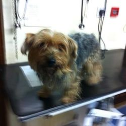 Found dog on 17 Apr 2014 in NEW ROSS CO.WEXFORD. Found a yorkie terrier New Ross Co.Wexford the dog is chipped not registared proof of ownership with dog licence and details of chip dog has a collar on plz share 0863507882 for more details thanks
