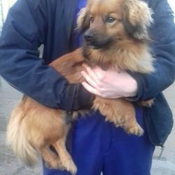 Found dog on 17 Feb 2018 in Corkagh Park , Clondalkin. found,now in the dublin dog pound.. Date Found: