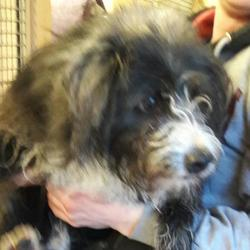 Found dog on 17 Jan 2017 in Cherrywood Est , Clondalkin. found, now in the dublin dog pound... Date Found: