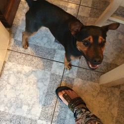 Found dog on 17 Jul 2017 in Callan Co. Kilkenny. un chipped total male approximately 3 years old.