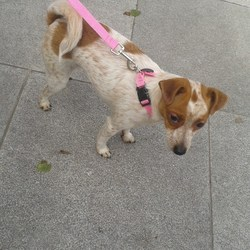 Found dog on 17 Jun 2013 in Cork City . Found 17th June.  Cork City Center.  A sweet Jr x .  Had no collar on or lead as seen in the pic .  I got a lead to put on her .  contact georgina81@live.ie.  PROOF OF OWNERSHIP REQUIRED