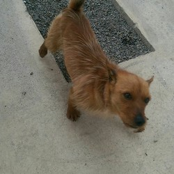 Found dog on 17 Jun 2016 in Trim to Summerhill Road. found..2yr old Male Terrier x...found on Trim to Summerhill Road...ref 245..wearing a red collar...contact Meath pound on 087 0676766..thanks