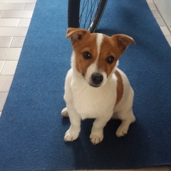 Reunited dog 17 May 2017 in dublin 8. Owners Found. Thanks