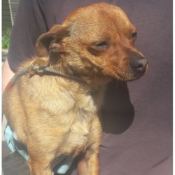 Found dog on 17 May 2018 in Fonthill Bus,Park. found, now in the dublin dog pound...Date Found: